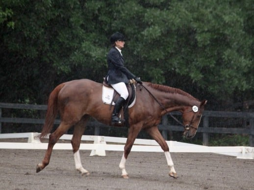 Saint Lawrence at a dressage show