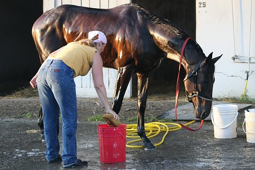 Bath time at the track.