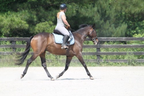 Popular Five - Thoroughbred doing dressage