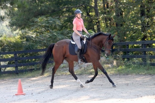 Callie's Wright is a Thoroughbred horse for sale at Bits & Bytes Farm