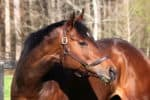 Absolute Charm - Thoroughbred Horse For Sale at Bits & Bytes Farm