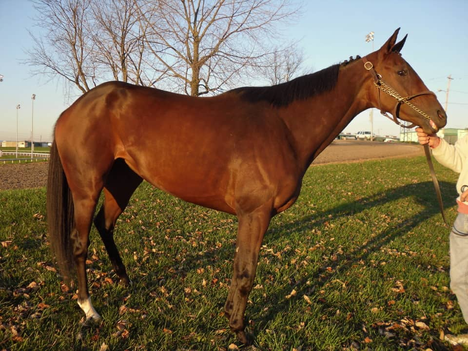 Foxy - Athletic Thoroughbred Filly For Sale