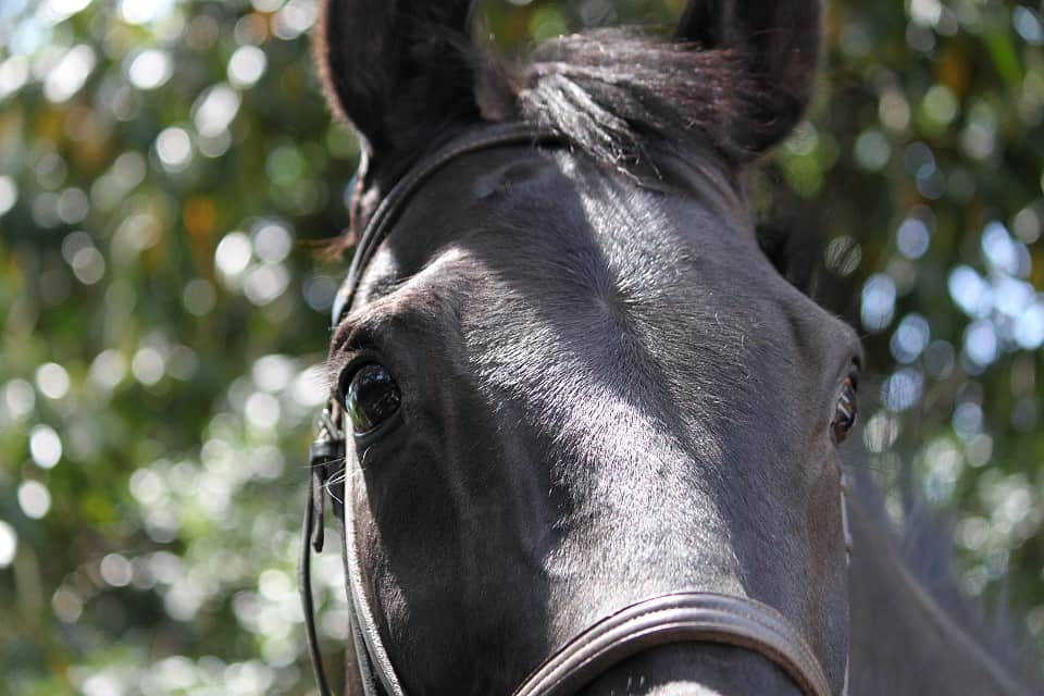 So Romeo - Thoroughbred Horse For Sale at Bits & Bytes Farm