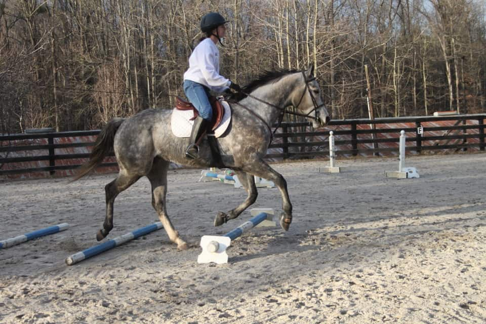 OTTB Young Joe learning to trot over poles on the ground