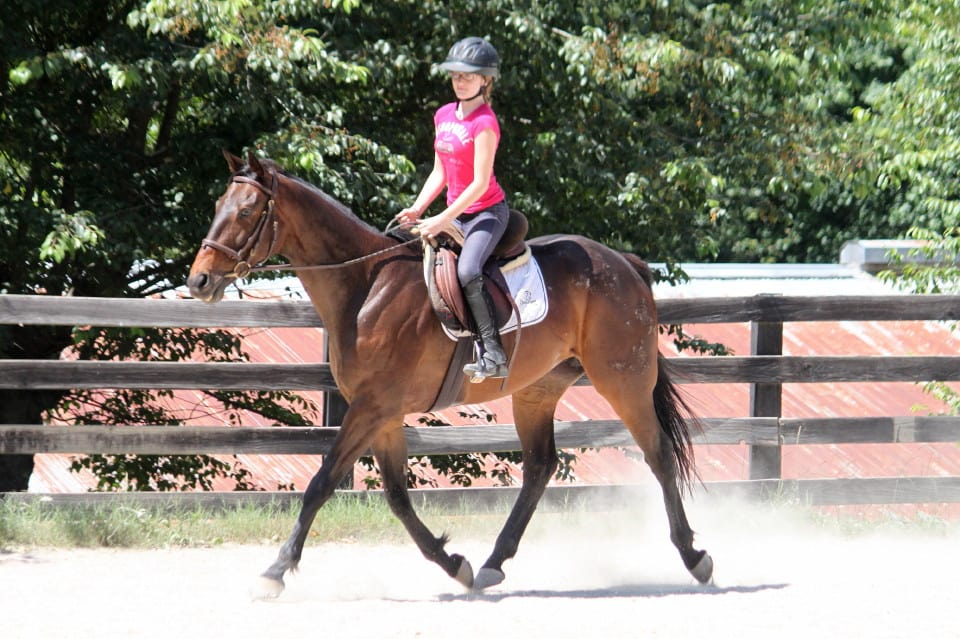 Brat Maverick - Thoroughbred Horse For Sale