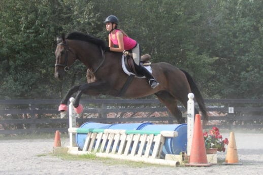 "OTTB Brew This aka ""Brewster"" loves to jump"