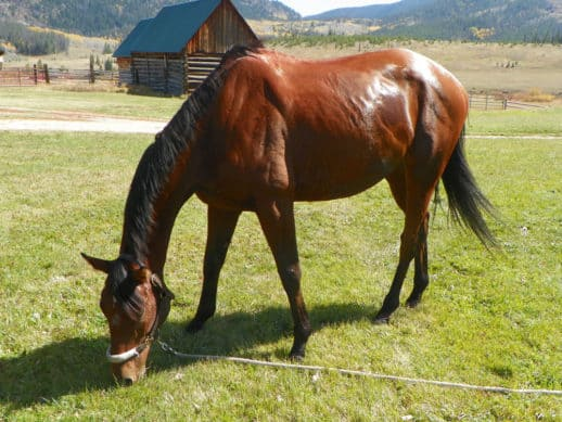 off-the-track Thoroughbred - Tillo at Flying Horse Ranch in Oak Creek, CO