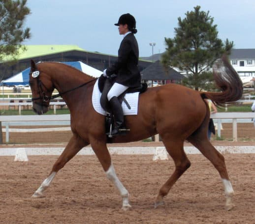 Former race horse Cold Cash as a dressage horse