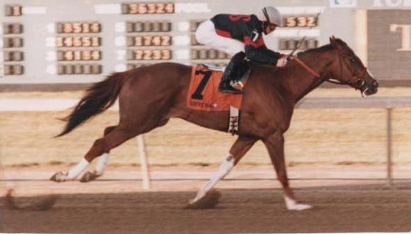Former race horse Cold Cash at the race track