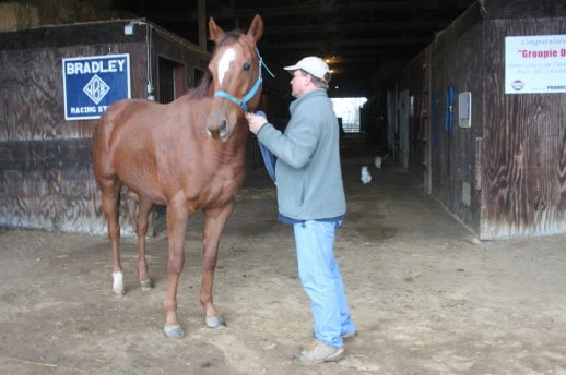 """Willam """"Buff"""" Bradley holds a Thoroughbred horse for sale"""