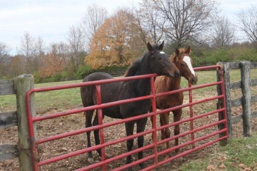 Kentucky Foals