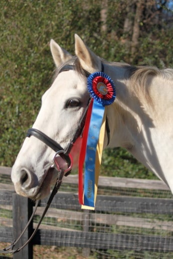 Detroit Iron - Race Horse to Dressage Champion