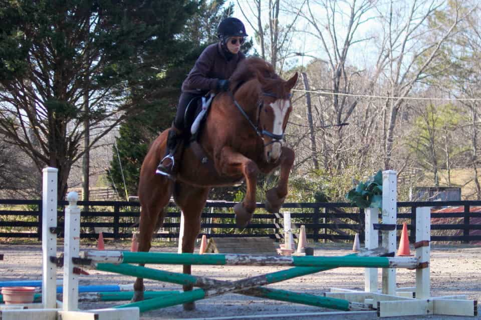 Thoroughbred horse for sale - Kokopelli loves to jump!