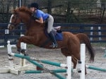 Kokopelli - Thoroughbred horse for sale