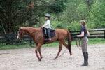 Kokopelli - Thoroughbred horse for sale