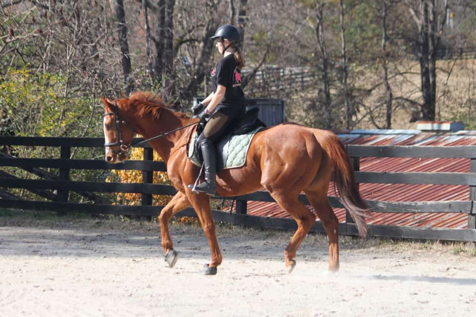 Kokopelli is an off-the-track Thoroughbred in training at Bits & Bytes Farm in Canton, GA.