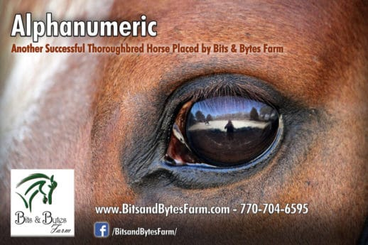 Former Thoroughbred race horse Alphanumeric's banner