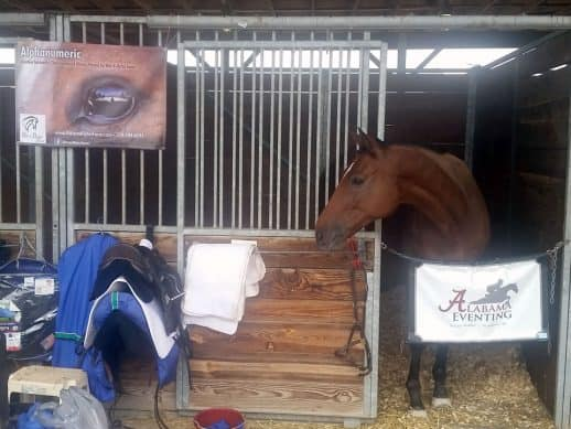 Former Thoroughbred race horse Alphanumeric competes in eventing at the Kentucky Horse Park