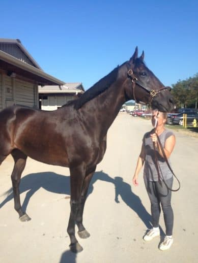 Do I Do was a prospect horse on the Bits & Bytes Farm Web site in October 2016
