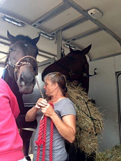 Do I Do trailers home with former Bits & Bytes Farm prospect horse Alphanumeric