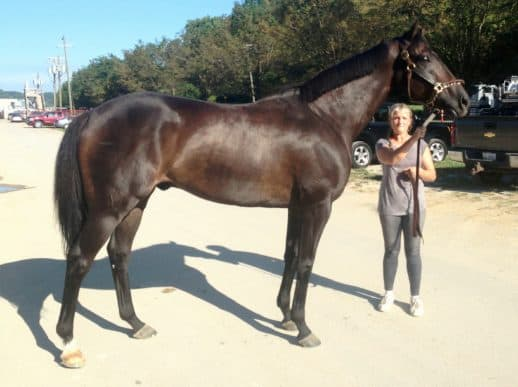 Thoroughbred horse, Do I Do at the race track
