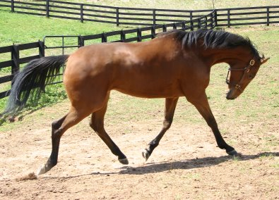 Thoroughbred - Heather's Best at Bits & Bytes Farm