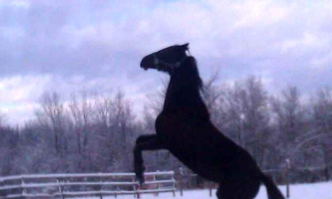 Chuck carried a photo of a black mare with him