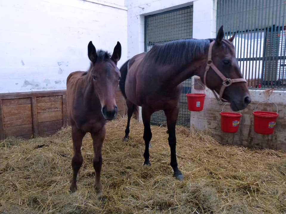 Sixth and Walnut with her 2015 foal