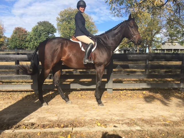 Tiz A Flyer - 16.3 hh Thoroughbred Horse For Sale - Bits & Bytes Farm