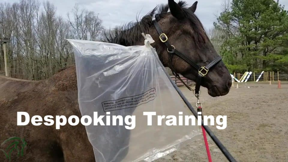 Despook Training for Thoroughbreds