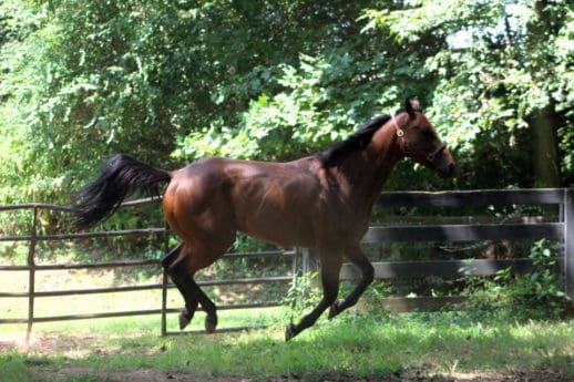 Safe Passage - Thoroughbred - SOLD! - Bits & Bytes Farm