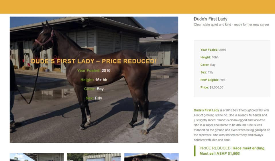 Dude's First Lady - PRICE REDUCED!
