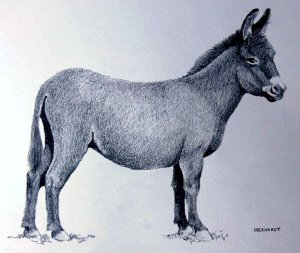 Donkey by Melanie Eberhardt