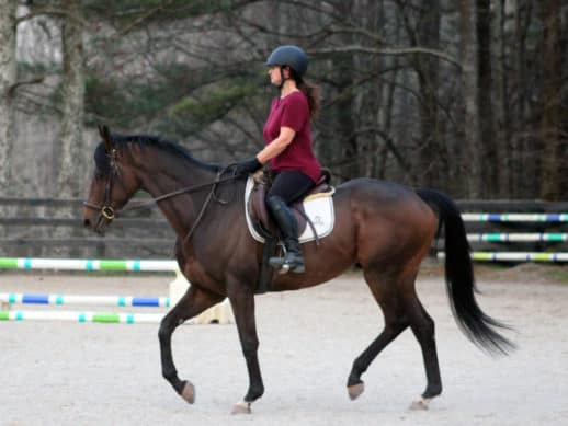Racehorse first ride off-the-track